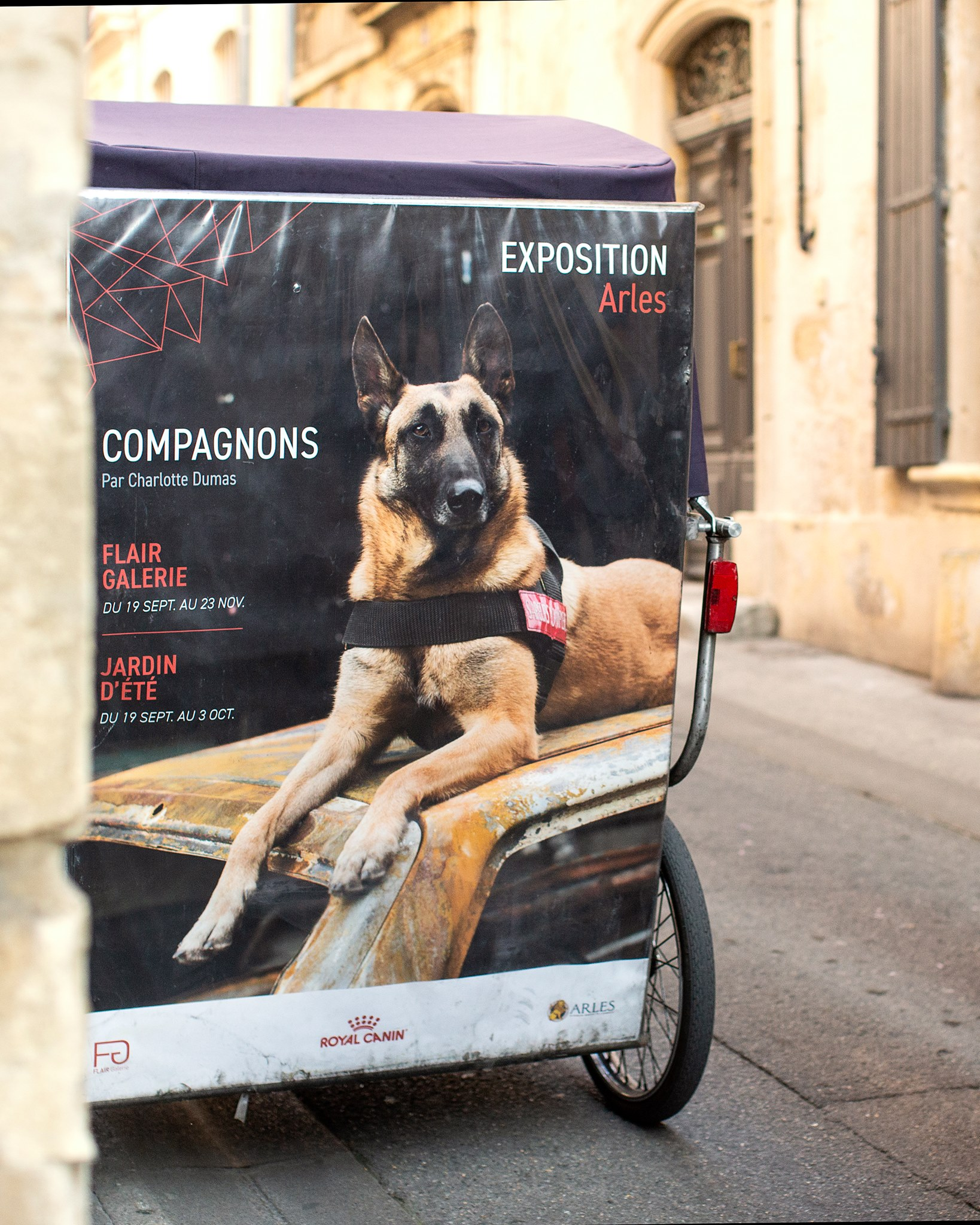 Compagnons Royal Canin